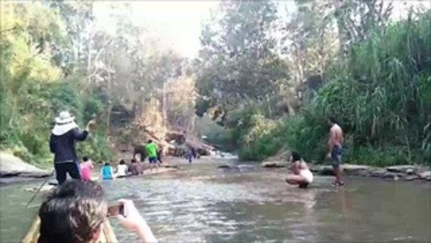 คนเชียงใหม่แชร์กระหึ่ม นาทีระทึก ช้างพุ่งใส่แพนักท่องเที่ยวคว่ำกลางลำน้ำ