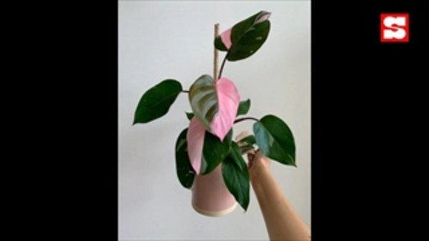 """โลกสีชมพูแซมเขียว """"ญาญ่า"""" เปิดไอจี """"yayasplants"""" รวมภาพต้นไม้ของญาญ่า และณเดชน์"""