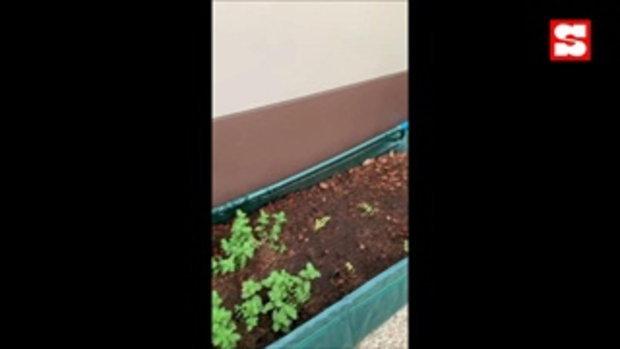 """""""สวนจูนี่"""" สวนครัวเล็กๆ ของฟลุค-แอปเปิ้ล กิจกรรมช่วงกักตัวอยู่บ้าน"""