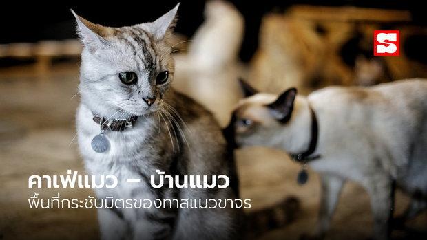 คาเฟ่แมว – บ้านแมว พื้นที่กระชับมิตรของทาสแมวขาจร