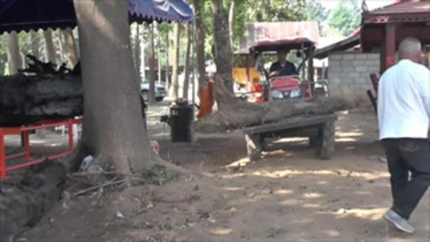 แห่ขอหวยต้นตะเคียน หลังงวดก่อนเลขผุดวันครู ถูกเลขท้าย 2 ตัวตรงยกหมู่บ้าน