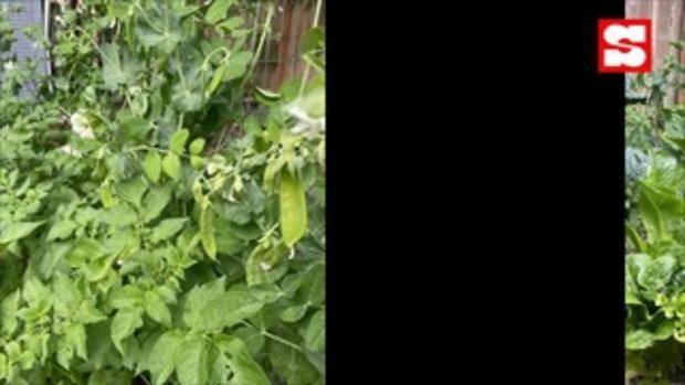 เปิดสวนผัก