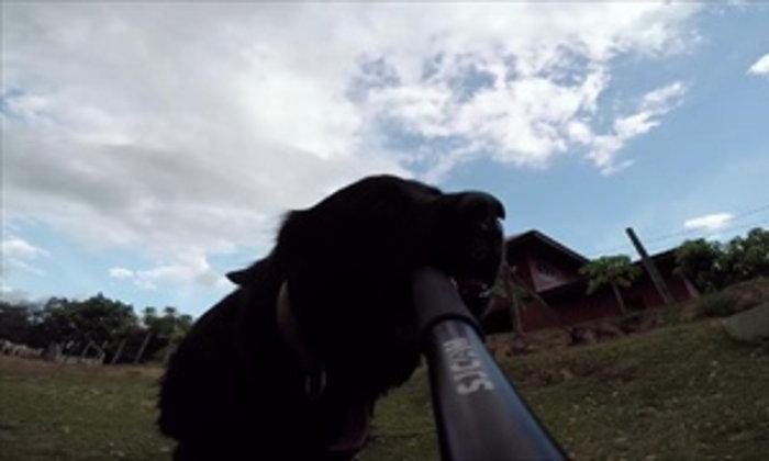 หมาบ้า ขโมยกล้องจากเจ้าของ วิ่งลั่นทุ่ง