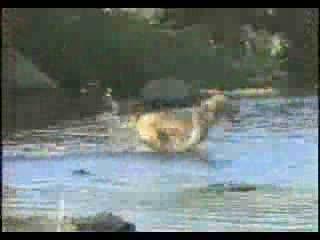 คลิปสุนัขแสนรู้....จับปลาได้ด้วย
