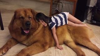 ต้องดู...เขาว่าสุนัขญี่ปุ่นรักเด็กมาก
