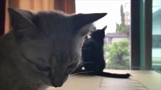 ต่อหน้าฉันเธอทำอย่างนั้นได้อย่างไร !! ชมเหมียวหงอย มองแมวคู่พลอดรักกันต่อหน้า