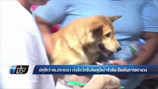 ปศุสัตว์-สธ.ประจวบฯ เร่งฉีดวัคซีนพิษสุนัขบ้าหัวหิน ป้องกันการขยานวง - เข้มข่าวค่ำ