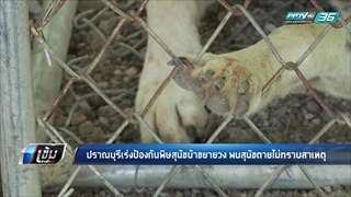 ปราณบุรีเร่งป้องกันพิษสุนัขบ้าขยายวง พบสุนัขตายไม่ทราบสาเหตุ - เข้มข่าวค่ำ