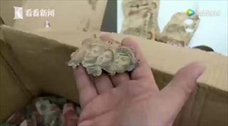 ปู่จีนสุดช้ำ ปลูกผักขายเก็บเงินมา 10 ปี กลับโดนหนูกัดขาดหมด