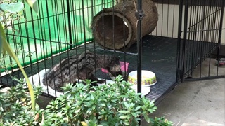 เผยภาพอีเห็นดอยสุเทพ-สัตว์ป่าที่บาดเจ็บ-พลัดหลงจากแม่ ทุกตัวปลอดภัยแล้ว