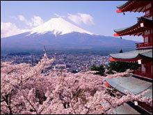ไปดูซากุระที่ญี่ปุ่นกัน !!