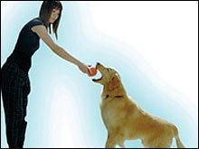 ปรับพฤติกรรมสุนัข เทคนิคสร้างสุขคนเลี้ยง-น้องหมา ตำรับ ประไพศิริ เชี่ยวสาริกิจ