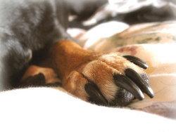 9 เคล็ดลับที่ทำให้การตัดเล็บน้องหมาเป็นของง่าย
