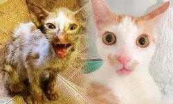 จากแมวข้างถนน บาดเจ็บเจียนตาย กลายเป็นแมวดังบน IG