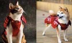เปลี่ยนสัตว์เลี้ยงแสนรักให้กลายเป็นนักรบด้วยชุดเกราะซามุไรขนาดจิ๋ว