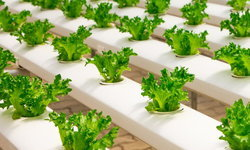 สุดยอดประโยชน์ของผักไฮโดรโปนิกส์ที่หลายคนอาจยังไม่รู้