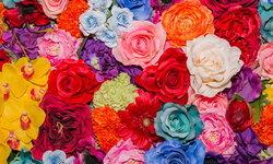 8 สีดอกกุหลาบ บ่งบอกความในใจ #ให้กุหลาบสีนี้เขาคิดอะไรกับเรา