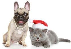 เมื่อน้องหมาและน้องแมวเป็นโรคหัวใจ