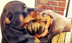 """ผลวิจัย เผย สุนัขรู้จัก """"ห่วงใย"""" เจ้าของที่กำลังเศร้าได้"""