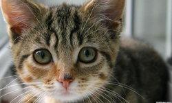 """สหรัฐฯ ยกเลิกการวิจัยโดยใช้ """"แมวทดลอง"""""""