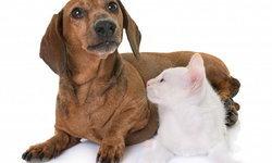 """""""ฮีทสโตรก"""" โรคที่สัตว์เลี้ยงก็เป็นได้ รับมืออย่างไรหากเกิดขึ้นกับสุนัขและแมวในหน้าร้อน"""
