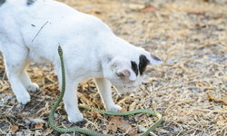 รพส.ทองหล่อ แนะระวังภัยช่วงหน้าฝนของสัตว์เลี้ยง พร้อมเผยวิธีปฐมพยาบาลหากหมาแมวถูกงูกัด