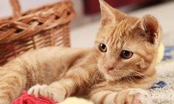"""เหล่าทาสจงระวัง 5 โรคร้ายที่เกิดขึ้นกับ """"แมว"""""""
