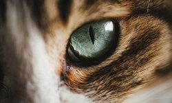 เหตุผลทางจิตวิทยาว่าทำไมคนญี่ปุ่นจึงรักแมวมาก!