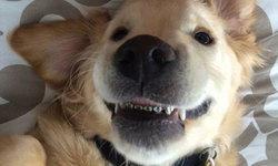 """มาดูน้องหมามีปัญหาช่องปาก จึงทำให้กลายเป็น """"เจ้าตูบฟันเหล็ก"""""""