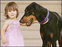 สุนัขโดเบอร์แมนช่วยชีวิตเด็ก
