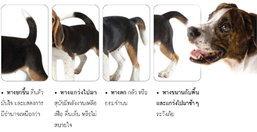 Dog to Dog Communication พูดจาภาษา หมา