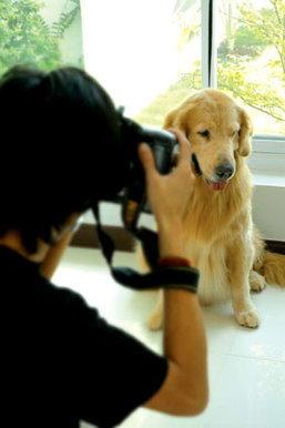 ตามหาช่างภาพไว้ถ่ายรูปคุณกับสัตว์เลี้ยง