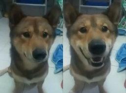 เจ้าหมาขี้อ้อนพูด Hello กับเจ้าของแบบชัดมาก