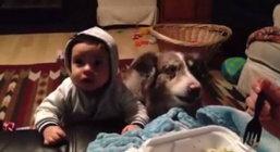 """คลิปสุนัขเรียก """"แม่"""" ได้เสียงชัดแจ๋วแถมขี้อ้อนสุดๆ"""