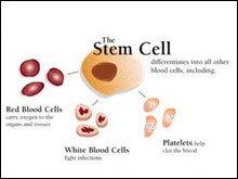 สเต็มเซลล์ หรือเซลล์ต้นกำเนิดคืออะไร