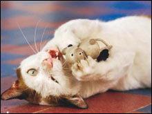 ของเล่น แมว สิ่งที่คนรักเหมียวต้องมีติดบ้าน