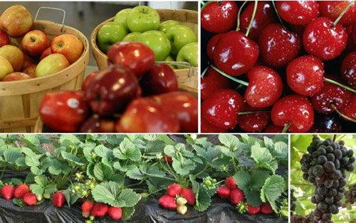 เพิ่มแรงต้านโรค ด้วยผลไม้