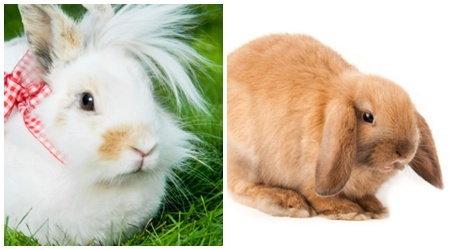 วิธีการเลี้ยงกระต่ายสำหรับมือใหม่เริ่มหัดเลี้ยง