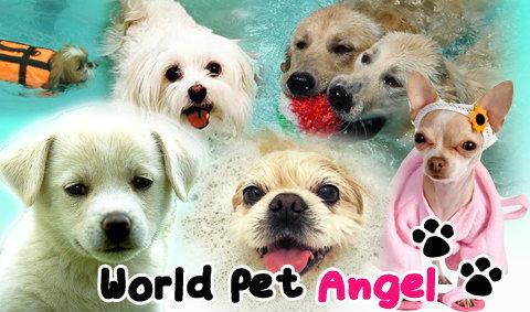 World Pet Angel บริการเพื่อน้องหมาที่คุณรัก
