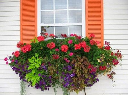 สวยจัง...สวนดอกไม้ริมหน้าต่าง