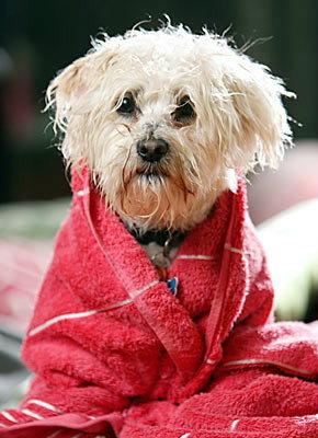 น้องหมาเปียกฝน… ระวังป่วย