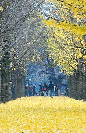 Seek love and you shall find …. @ Nami Island