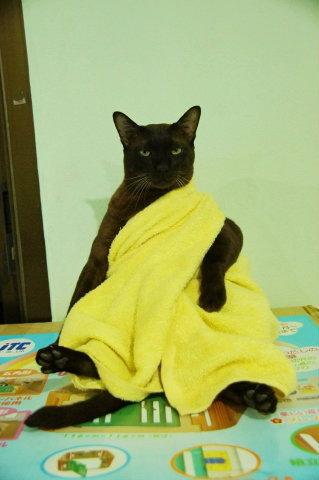 """""""อาตแมว"""" เซเลบ ชื่อก้อง เพจ """"จอนนี่แมวศุภลักษณ์"""""""