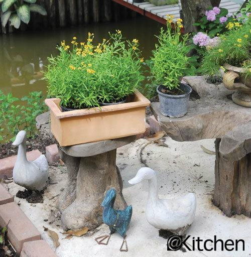 สวนครัวก็สวยได้ ด้วยทาร์รากอน