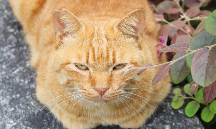 """ทำความรู้จักความแตกต่าง """"แมวท้องถิ่น"""" กับ """"แมวจรจัด"""" ในประเทศญี่ปุ่น"""
