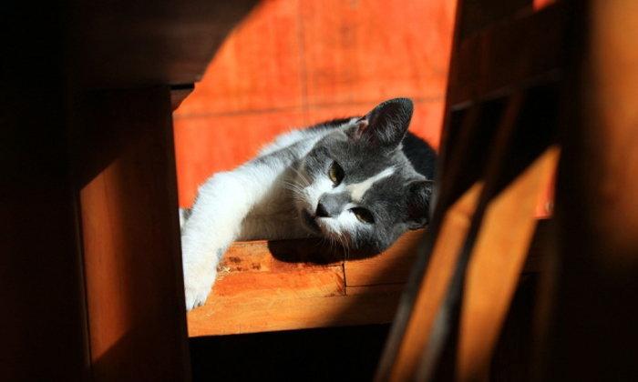 5 เคล็ดลับ เลือกที่พักให้สัตว์เลี้ยงแสนรัก เมื่อคุณต้องออกไปเที่ยว!