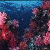 ทะเลสิมิลัน จ.พังงา