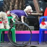 กิจกรรม Dog Day Say Cheeze