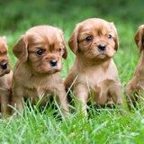 10 พันธุ์หมาเล็กๆน่ารัก พกพาง่ายอุ้มสบายมือ