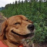 หมายิ้ม